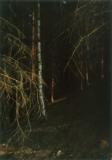 Jitka Hanzlová, aus: Forest, 2000 - 2005, ©Jitka Hanzlova und VG Bild-Kunst, Bonn 2018