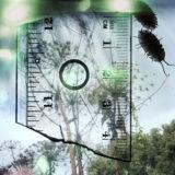 Stephen Gill, aus der Serie: Talking to Ants, 2009-2013/2013, Archival pigment print © Stephen Gill / Courtesy Christophe Guye Galerie, Zürich
